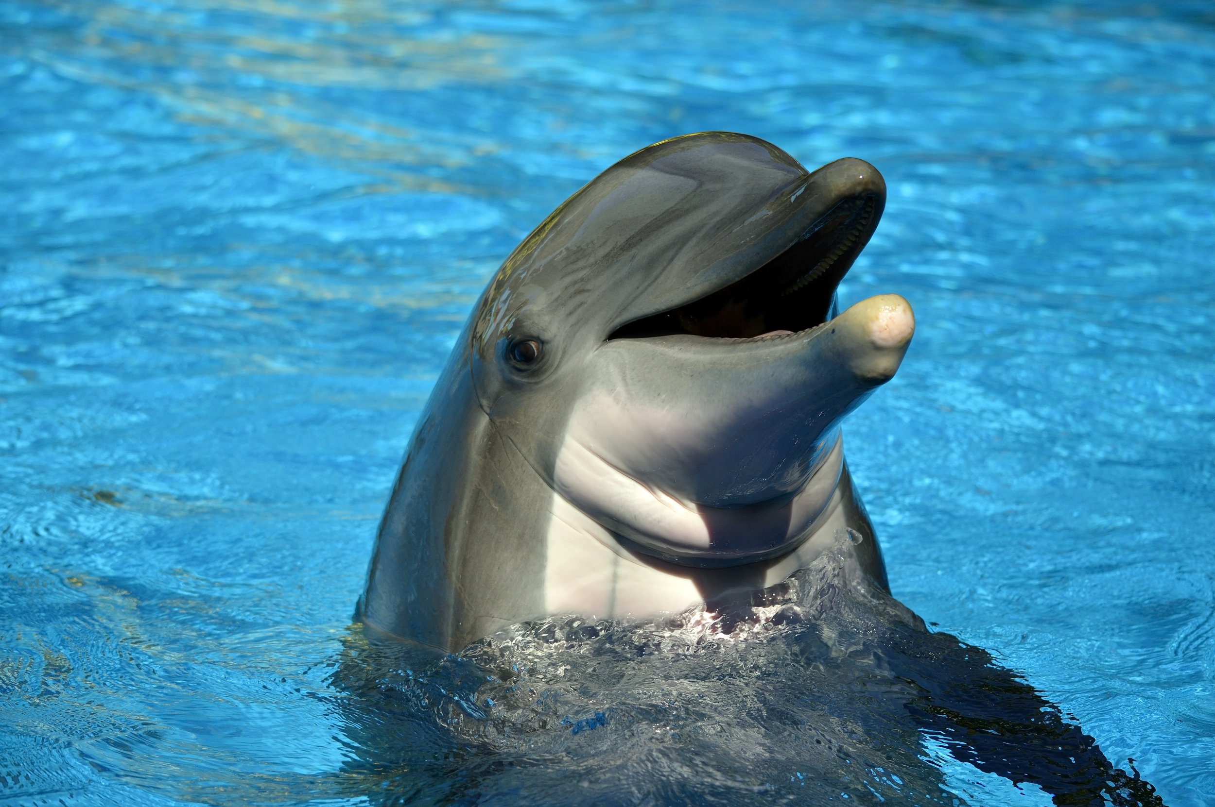 Dolphins sex for fun